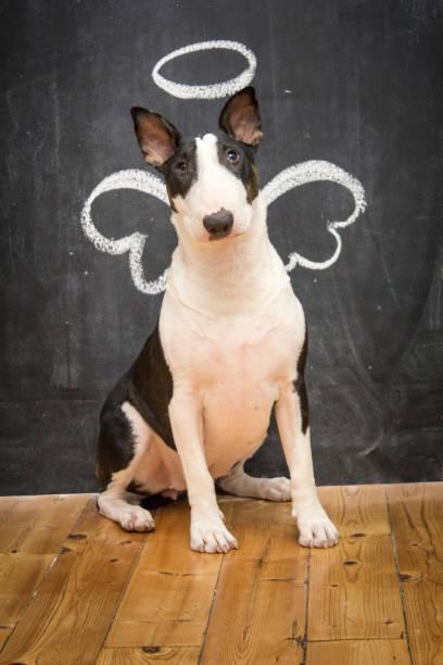 engel-doggy - engel zeichnen stock-fotos und bilder