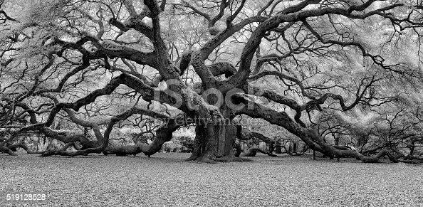 An infrared image of Angel Oak in Charleston, South Carolina.