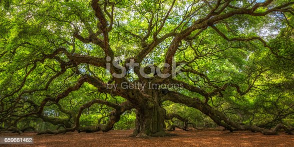 The old and historic Angel Oak Tree