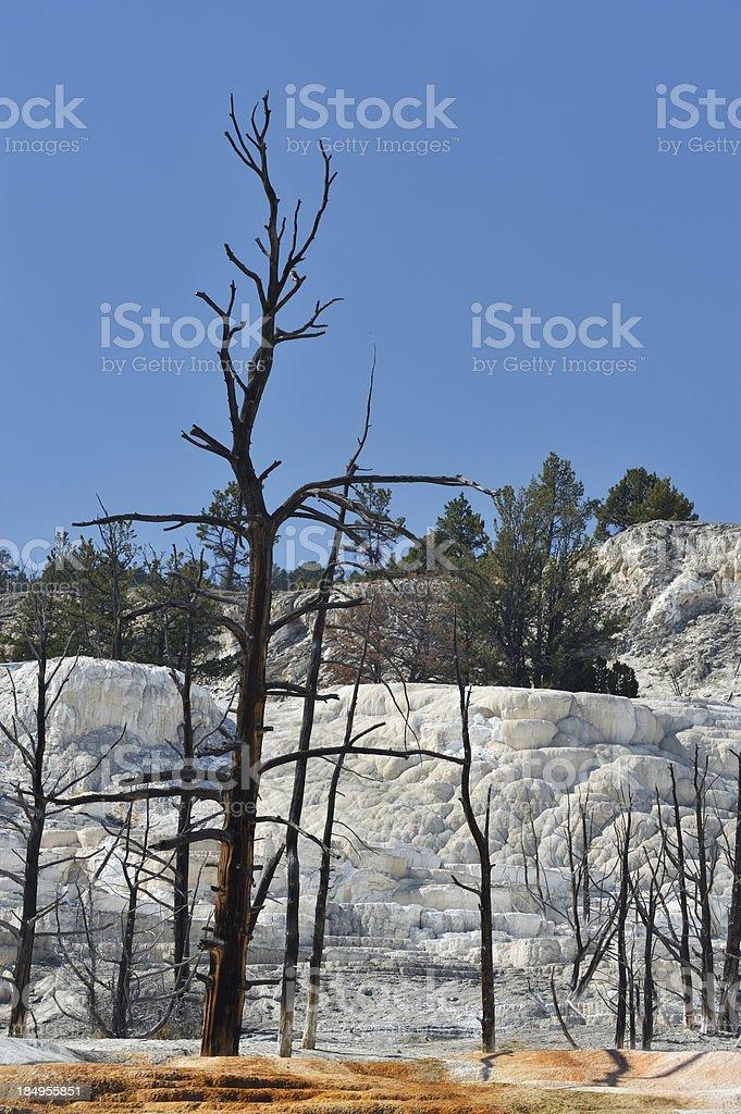 Angel Terrace, Yellowstone National Park. stock photo