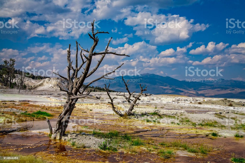 Angel Terrace, Yellowstone National Park, Wyoming, USA stock photo