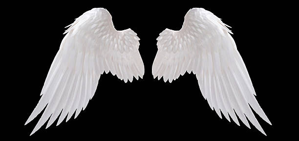 angel wing stock photo
