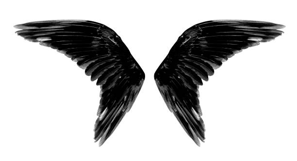Angel wings isolated on white background stock photo