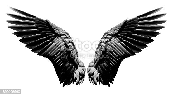 istock Angel wings, Natural black wing plumage isolated on white background with clipping part 890006590