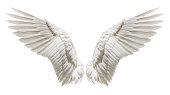 istock Angel wings, Natural plumage wing 836113536