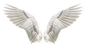 Angel wings, Natural plumage wing