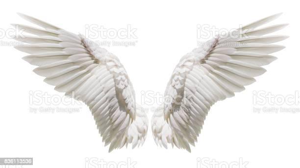 Angel wings natural plumage wing picture id836113536?b=1&k=6&m=836113536&s=612x612&h=io9k7cioxon7bzjvqj0motu8fhwizcknhrkx1wevrec=
