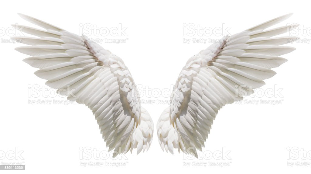 Angel wings, Natural plumage wing - foto stock