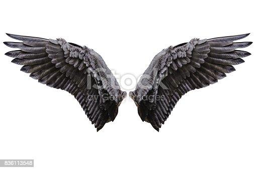 istock Angel wings, Natural plumage wing 836113548