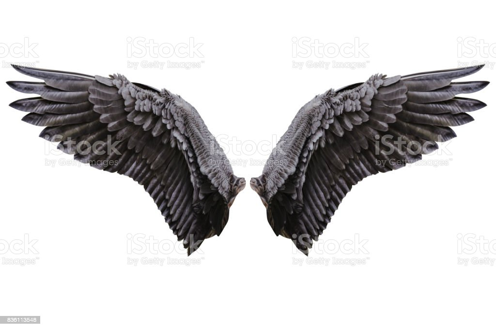 Angel wings, Natural plumage wing stock photo