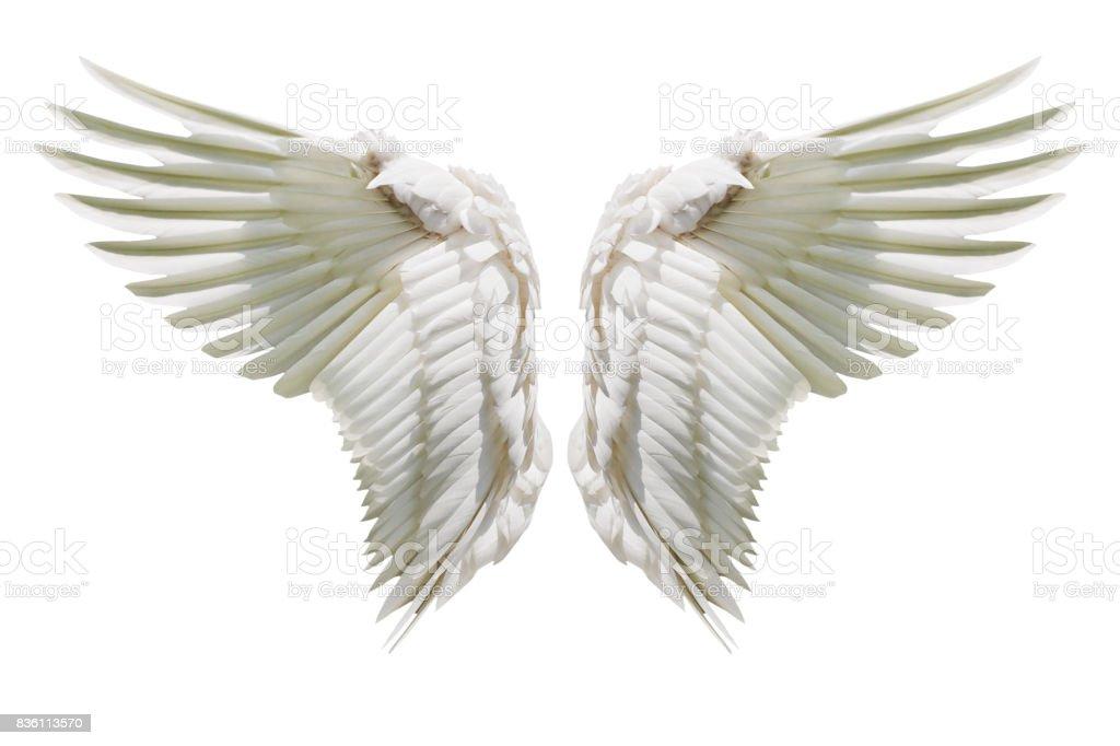 Alas de Ángel, alas de plumaje Natural - foto de stock