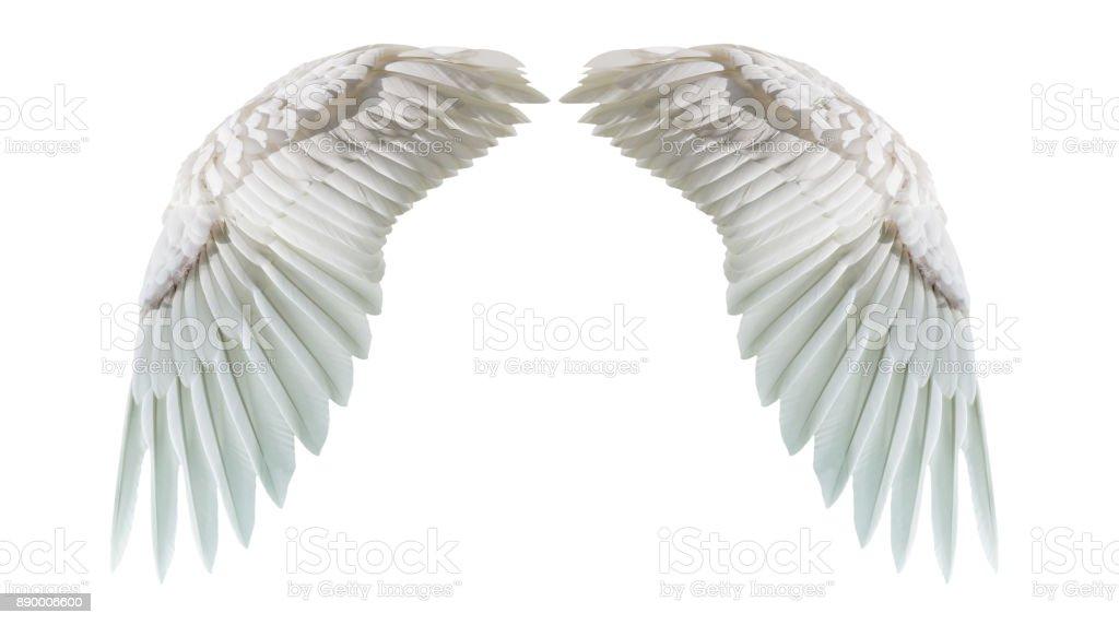 Alas de Ángel, plumaje Natural ala blanco aislado en fondo blanco con la parte de recorte - foto de stock