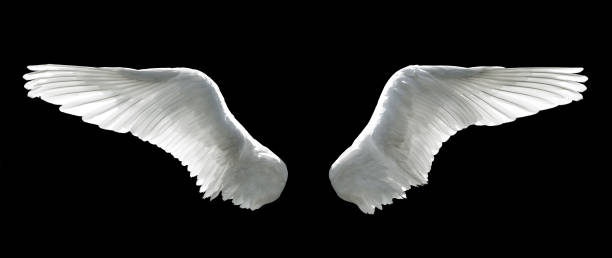 angel wings - ala di animale foto e immagini stock