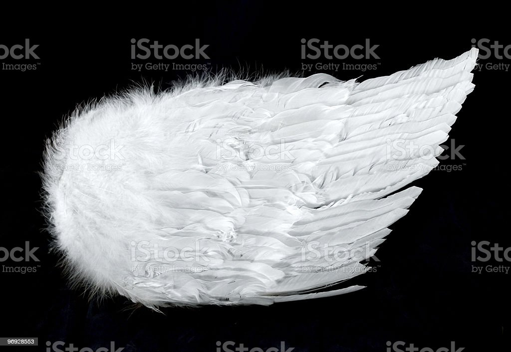 Angel Wings Side View Isolated on Black royalty-free stock photo