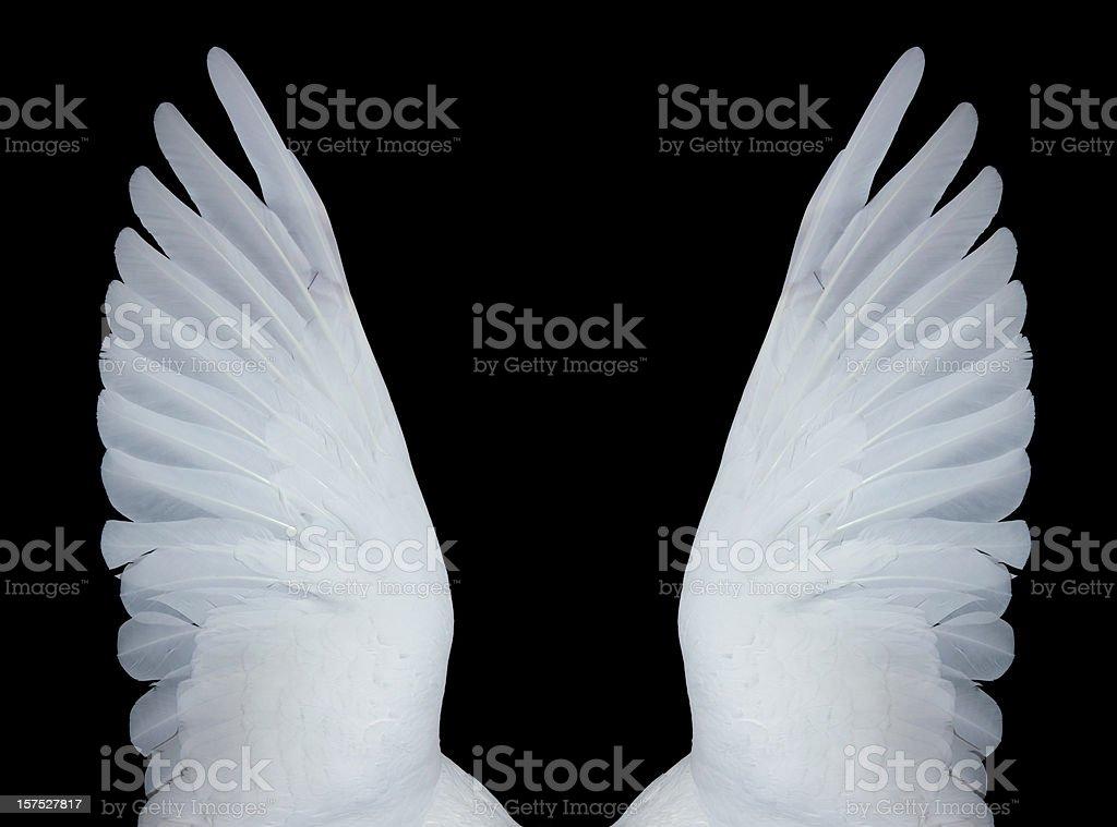 Angel wings, XXXL royalty-free stock photo