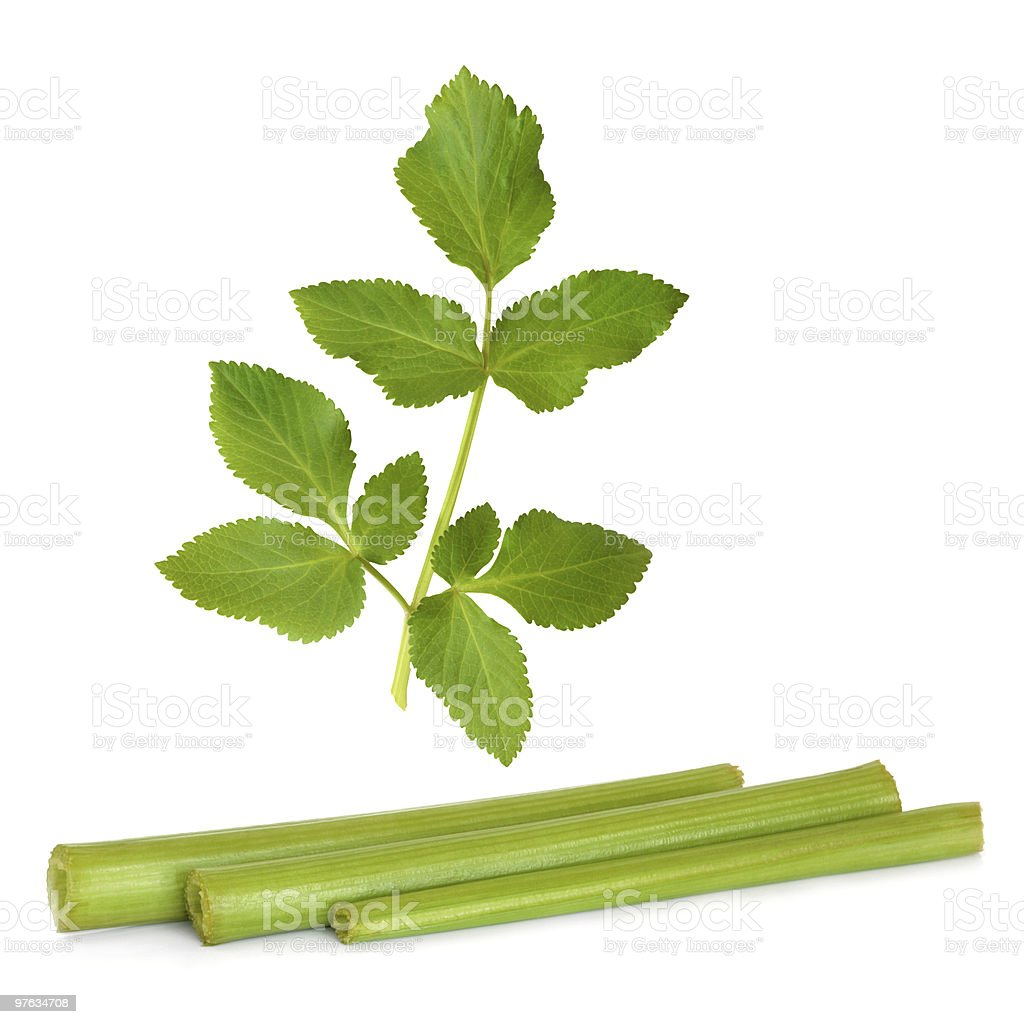 Angelica Herb Leaf and Stems royalty-free stock photo