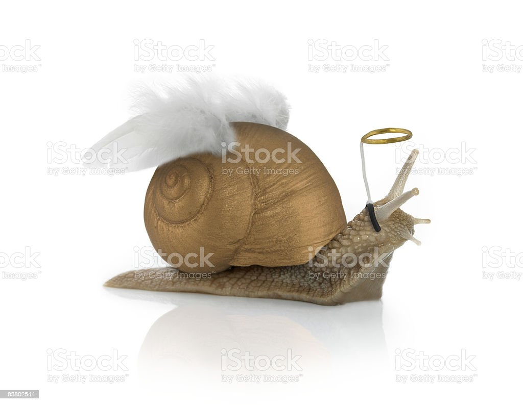 Angelsnail photo libre de droits