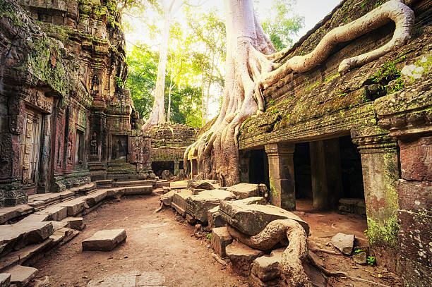 Angkor Wat Cambodia. Ta Prohm Khmer temple Angkor Wat Cambodia. Ta Prohm Khmer ancient Buddhist temple in jungle forest. Famous landmark, place of worship and popular tourist travel destination in Asia. antediluvian stock pictures, royalty-free photos & images