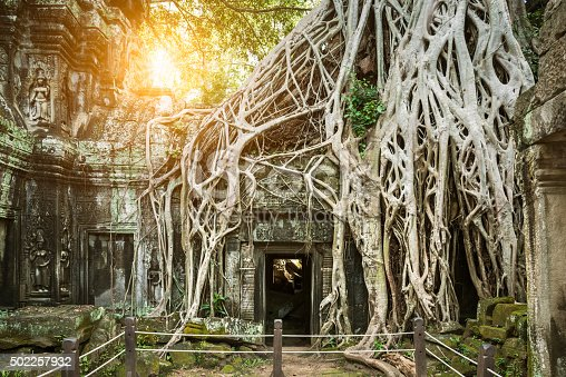 Large tree growing over the top of a temple in Angkor, Cambodia