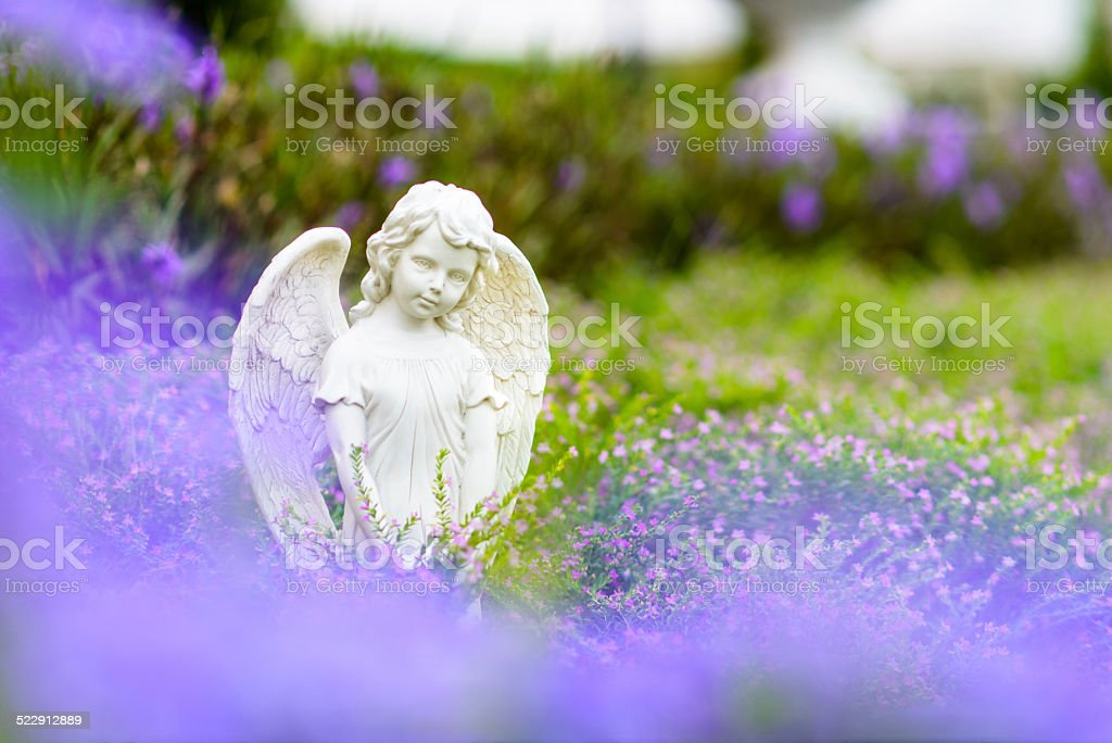 Angle wing in garden. stock photo