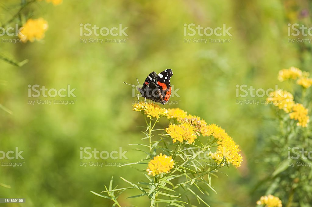 Angle with Wings Series royalty-free stock photo