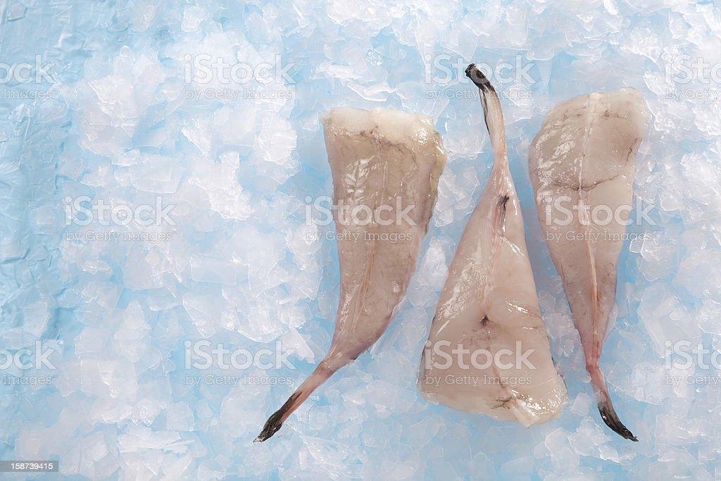 angler fish royalty-free stock photo