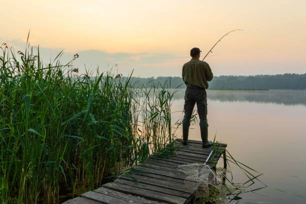 Angler Angler catching the fish from wooden pier during dawn freshwater fishing stock pictures, royalty-free photos & images