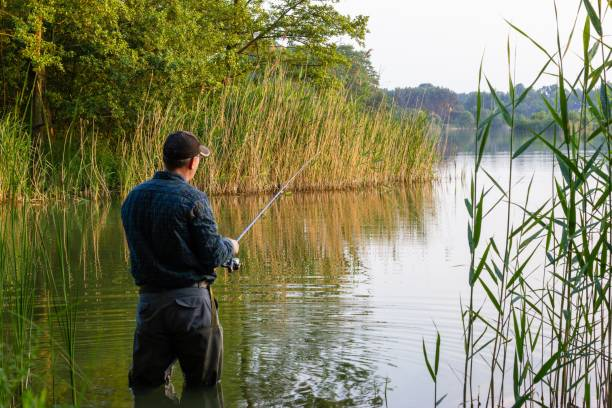 angler angler standing in the lake and catching the fish freshwater fishing stock pictures, royalty-free photos & images