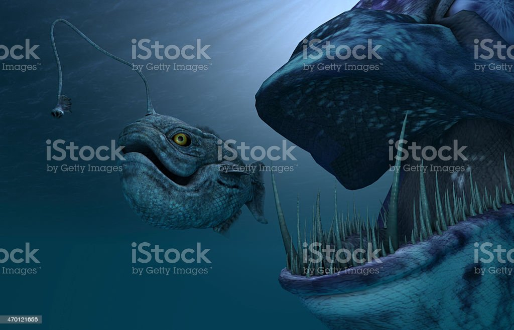 anglerfish stock photo
