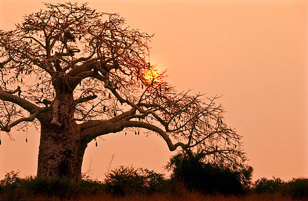 angola, bengo province, kissama national park, sunset. - angola stock photos and pictures