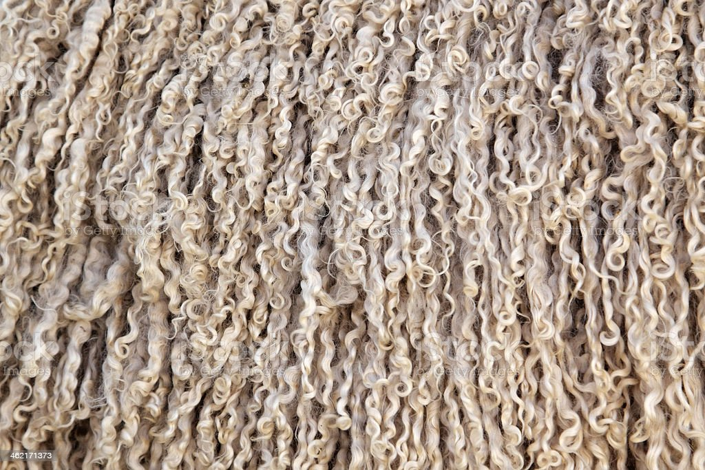 Angora goat wool background stock photo