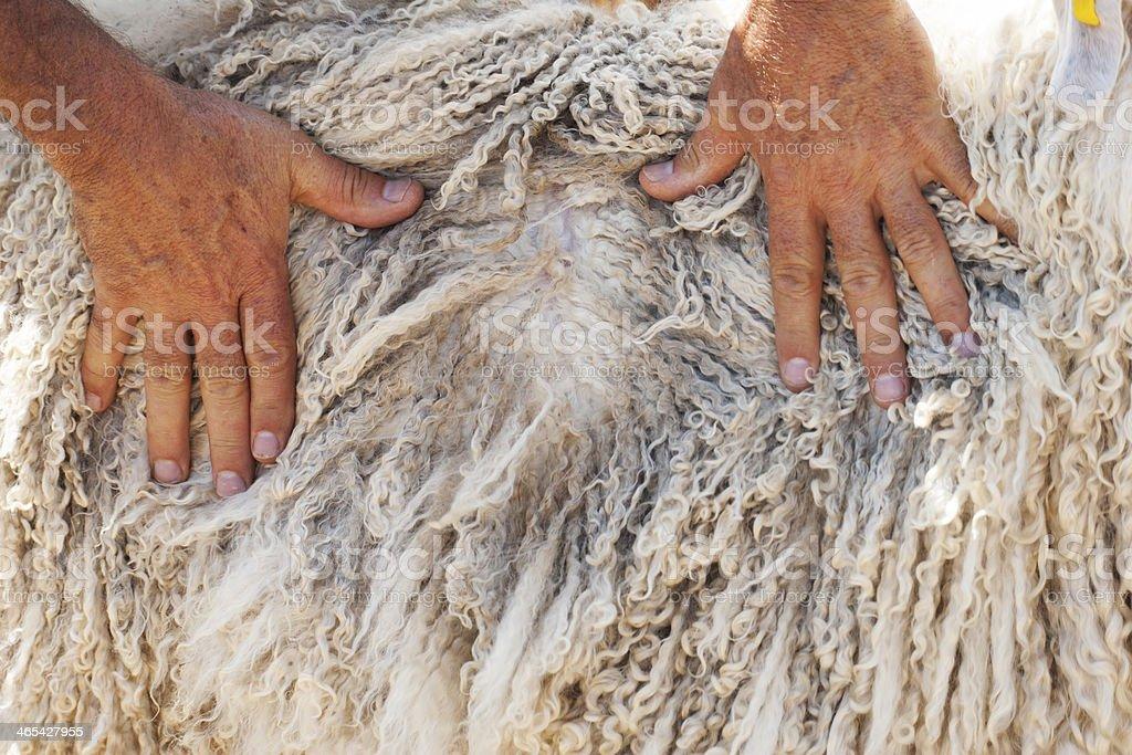 Angora Wool Mohair stock photo