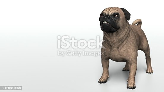 Angry and crazy pug dog breed standing and posing 3d illustration