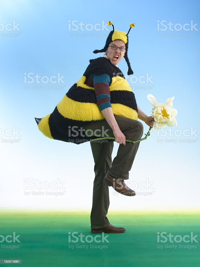 Angry Bee stock photo