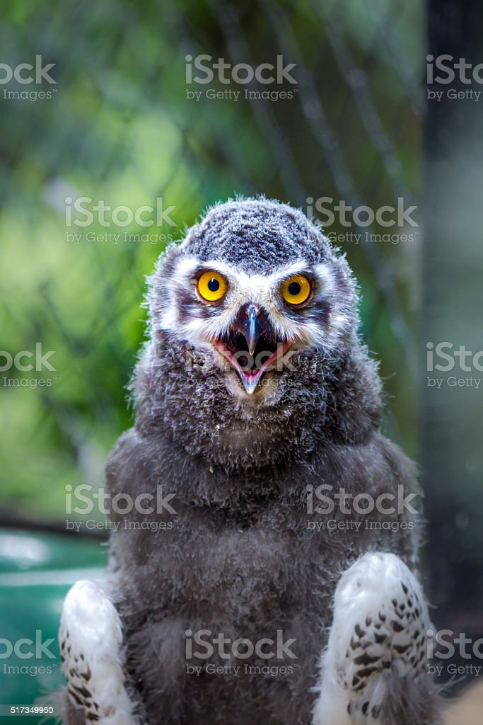 Angry bird – Foto