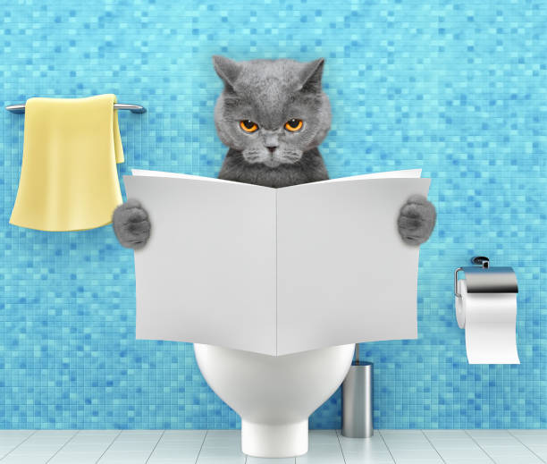 Angry cat sitting on a toilet seat with digestion problems or constipation reading magazine or newspaper stock photo