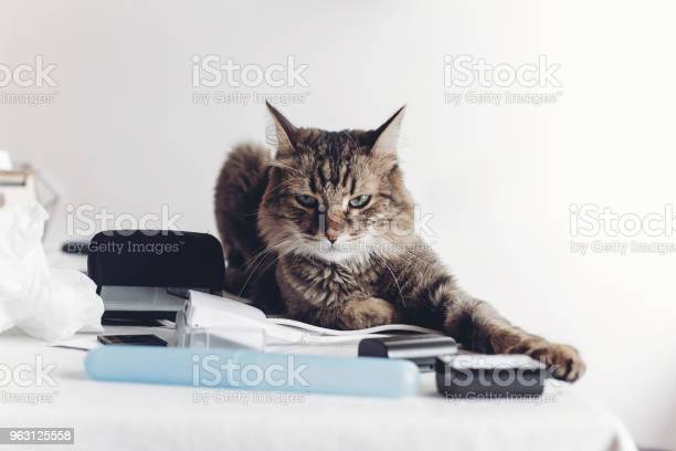 Angry cat sitting on table with work items funny moment cat at home picture id963125558?b=1&k=6&m=963125558&s=612x612&h=wa824kb c8ti o vxdbcnq4i7jist1gfs55lwreo 74=