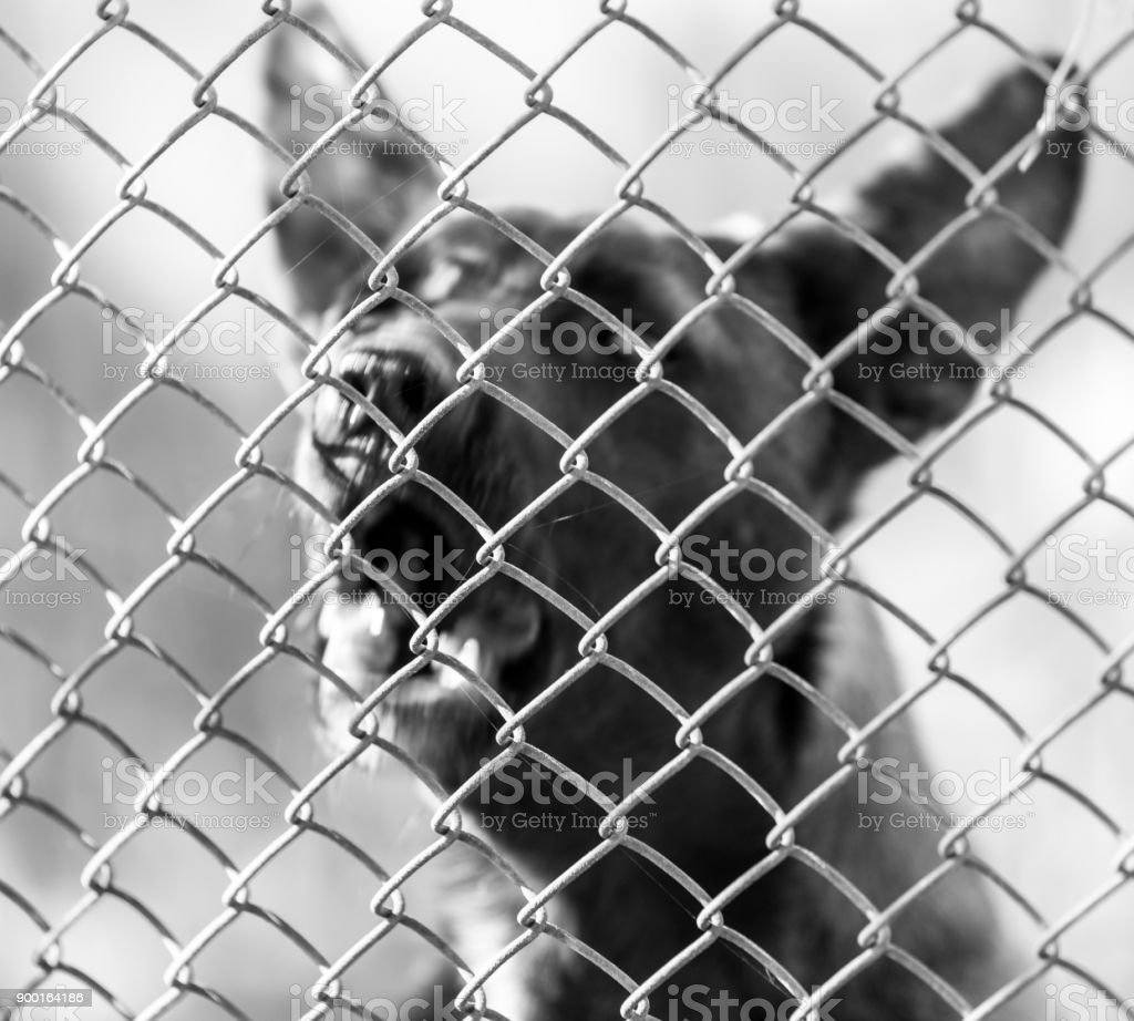 angry dog behind the fence stock photo