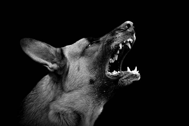 Angry dog on dark background stock photo