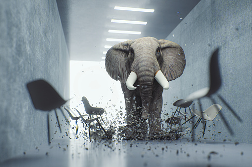 istock Angry elephant in the office 1164217945