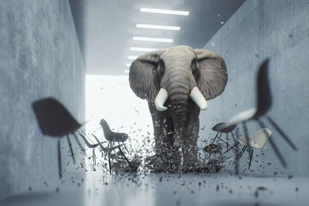 elefante enojado en la oficina - mandón fotografías e imágenes de stock