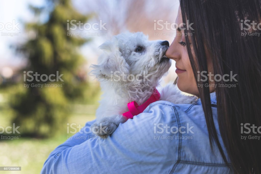 Angry little puppy stock photo