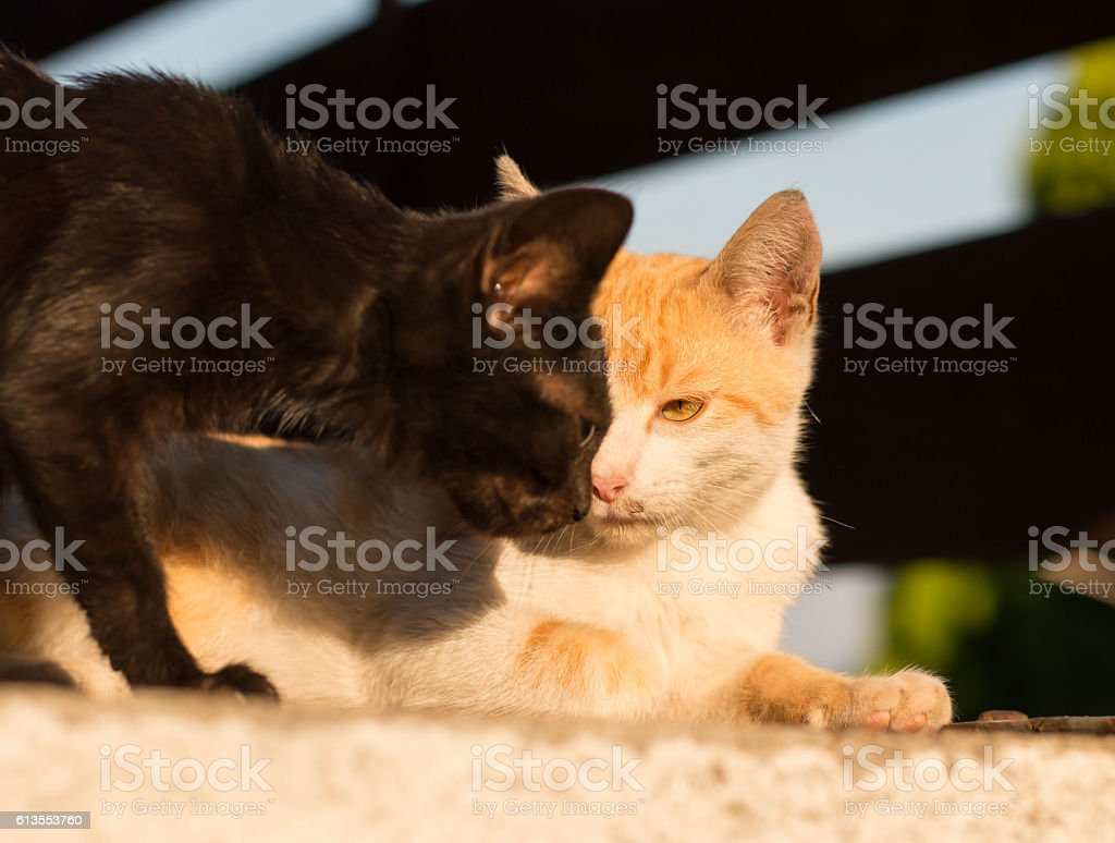 Angry looking kitty stock photo