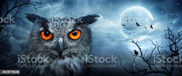 Angry owl at moonlight in the spooky forest halloween scene picture id842875646?b=1&k=6&m=842875646&s=612x612&h=lnxj5txxbkwh6yumoalp0eg2hhr9pjoapbpdeonzy3c=