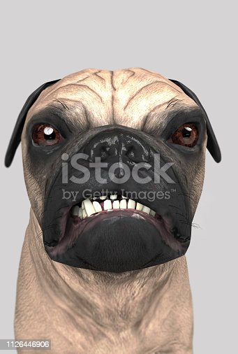 Angry pug looking not glad and not satisfied wide angle 3d illustration