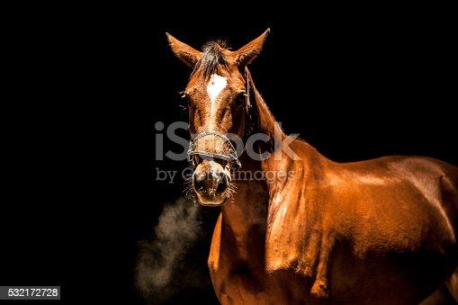 istock Angry stallion 532172728