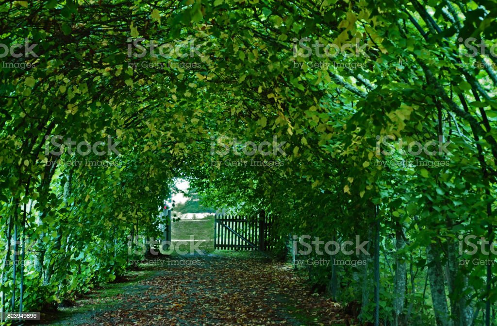 Angso National Park Vasteras Stock Photo More Pictures Of Green