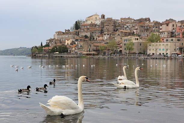 Anguillara mit Schwänen, der Lago Italien, Bracciano Lazio – Foto