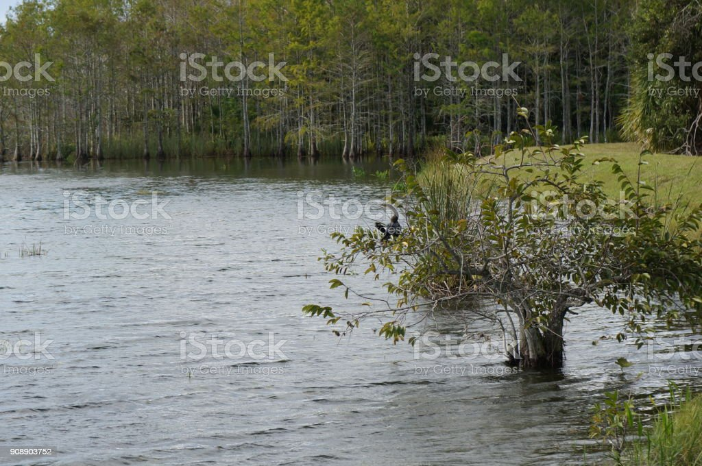 anhinga perched in tree stock photo
