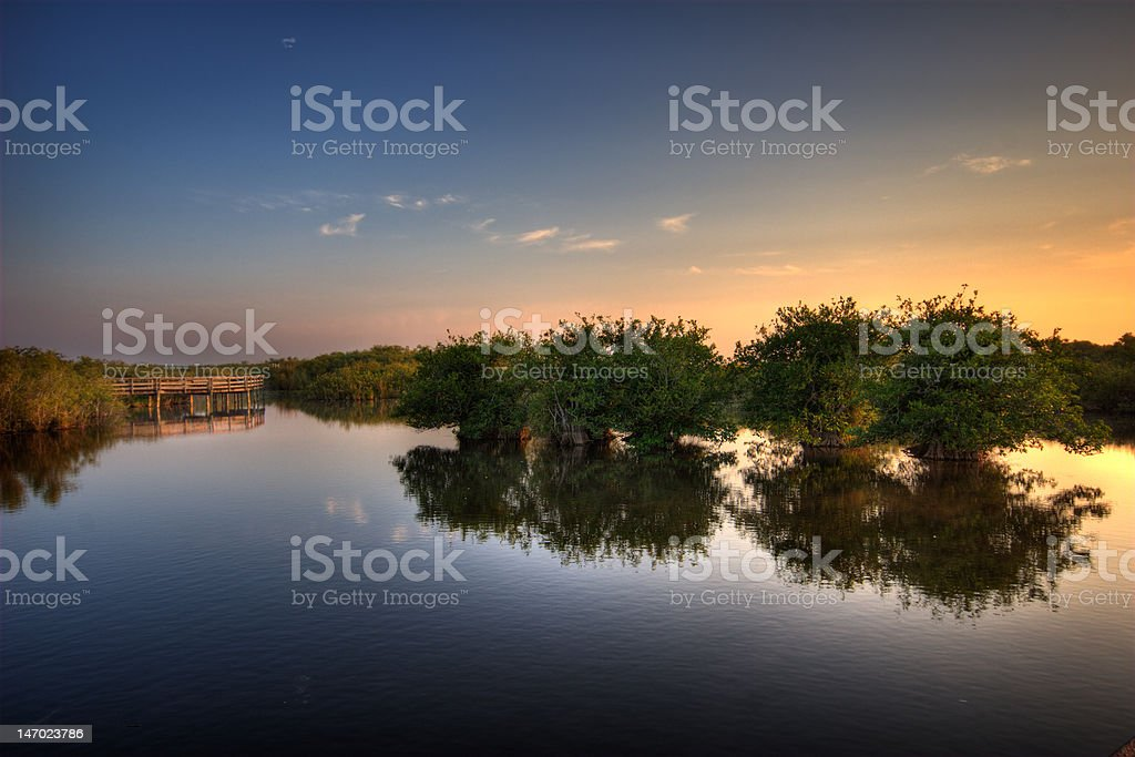 Anhinga Sunrise II stock photo